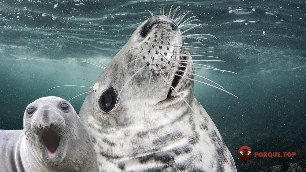 Los mamíferos pueden beber agua de mar